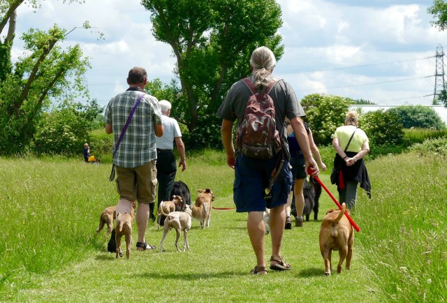 Dogwalkers at @ Waltham Marsh Waltham Forest borough London 010617 © david.altheer[at]gmail.com