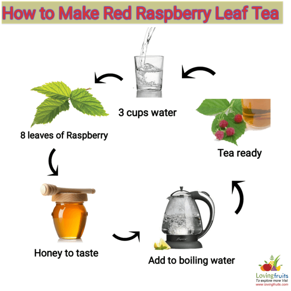 How to make raspberry leaf tea