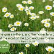 """""""The grass withers, and the flower falls off, but the word of the Lord endures forever."""" - 1 Peter 1:24-25"""