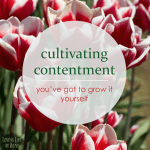 Cultivating Contentment in the Season you're In