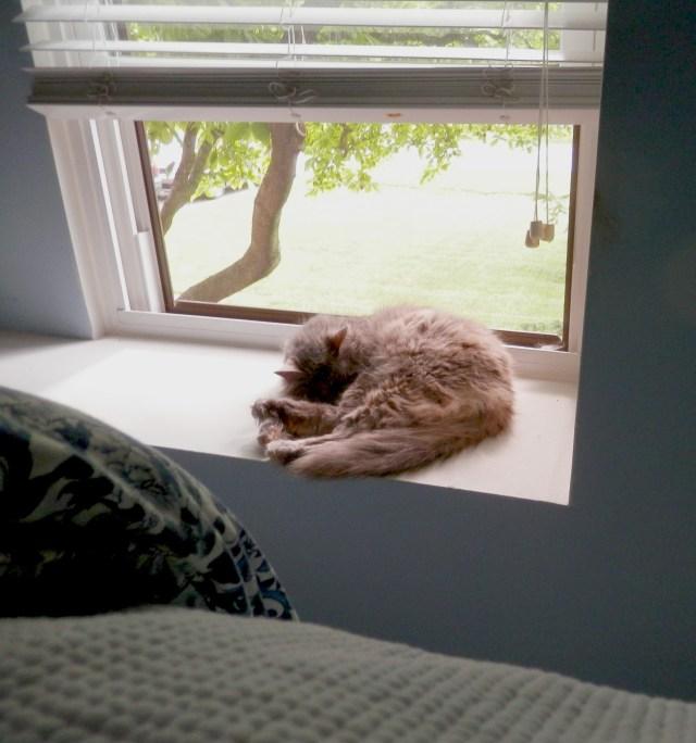 """""""Kitten"""" napping!"""