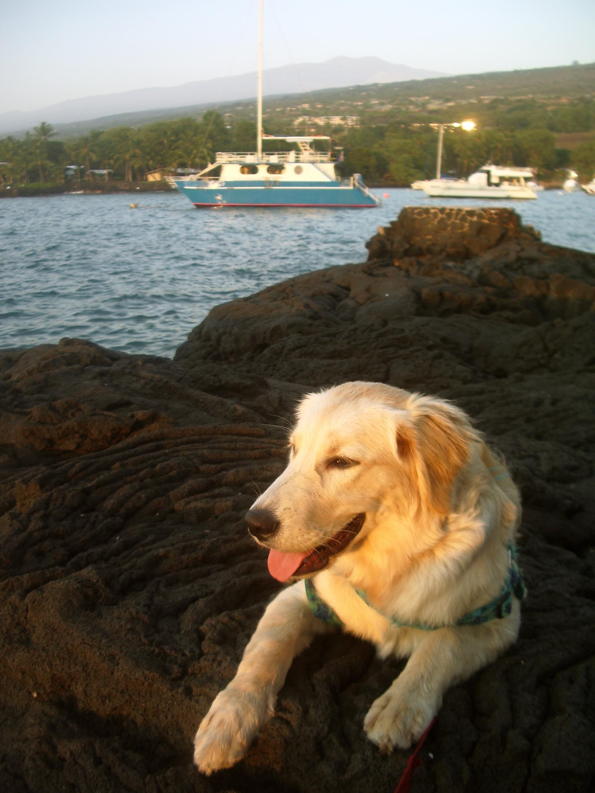 Trogdor at Keauhou Bay, Kona Hawaii: Photo by Donnie MacGowan