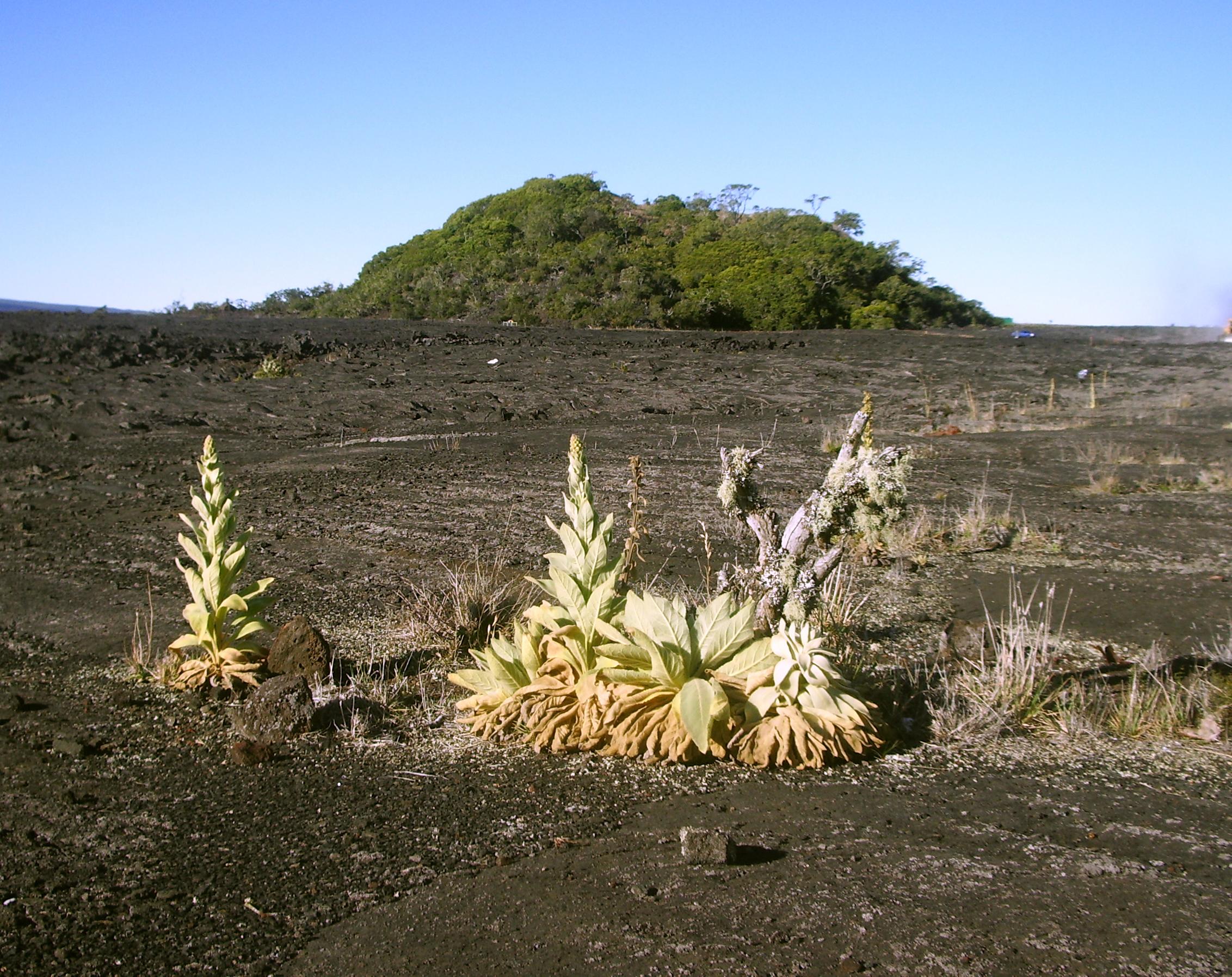 Kipuka Huluhulu from Saddle Road: Photo by Donald MacGowan