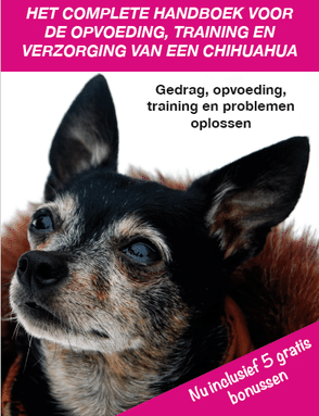 Chihuahua-Handboek