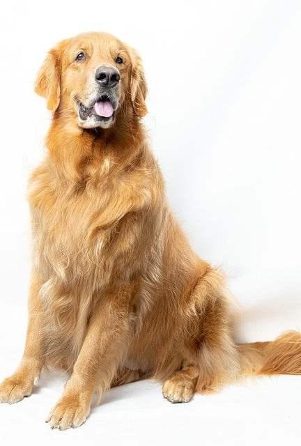 Zindelijkheidstraining voor een pup, hoe doe je dat?