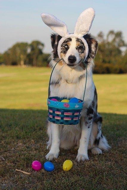 Pasen met jouw hond