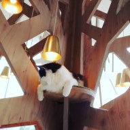 Cat Cafe!