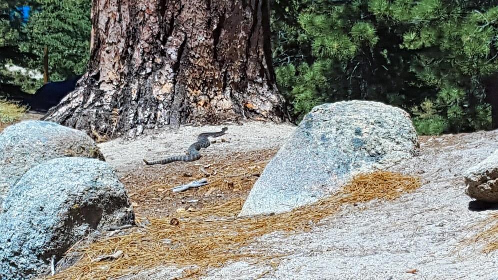 Snake at Castle Rock Trail
