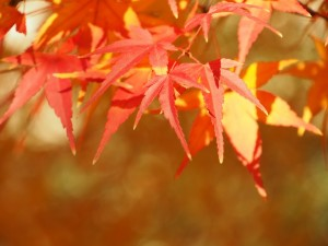 autumnal-leaves-1085023_960_720-300x225