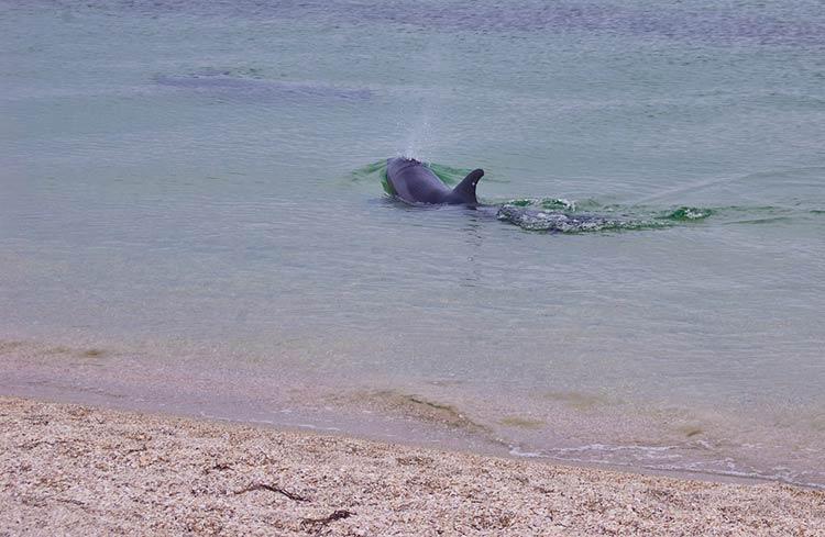 Дельфіни на Тендрі