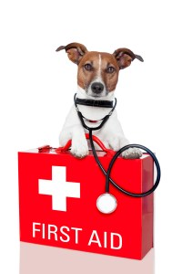 Affordable Emergency Pet Care
