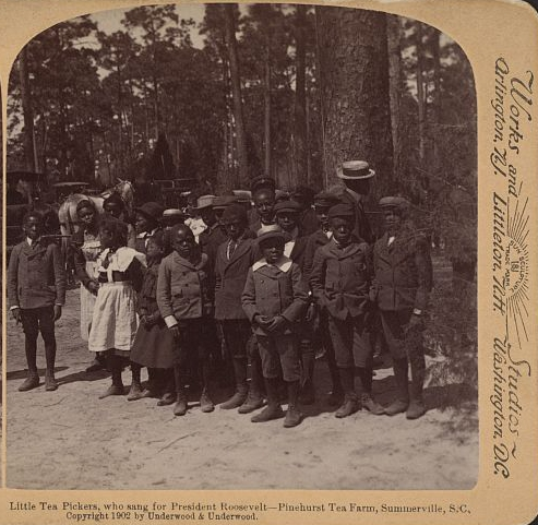 Tea Pickers, Who Sang for President Roosevelt – Pinehurst Tea Farm, Summerville, S.C., ca. 1902