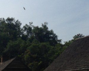 Sankofa Bird Over Slave Cabins Photo by Toni Renee Battle