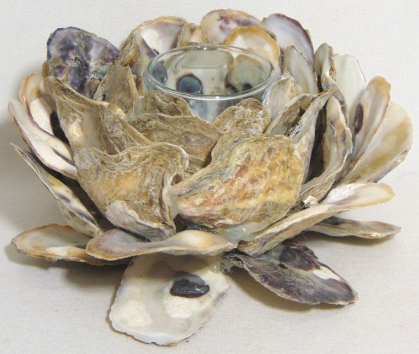 oyster flower ch