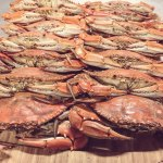 blue-crab-fade