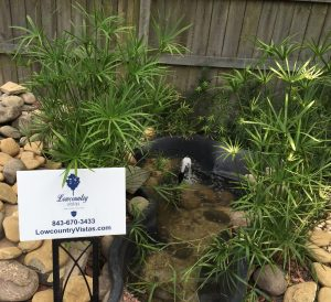 Seth Mason Charleston SC Work koi pond and Japanese garden