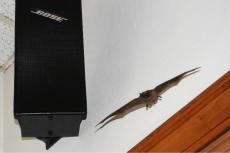 Another bat