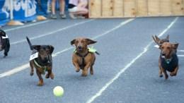 dogs racing