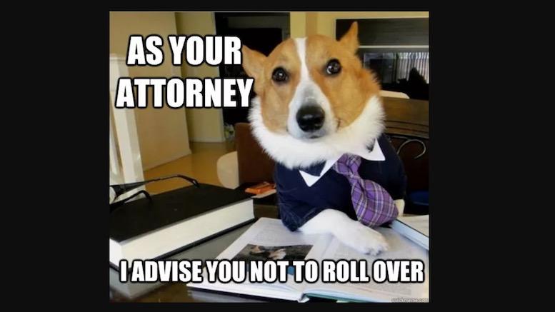 lawyer dog