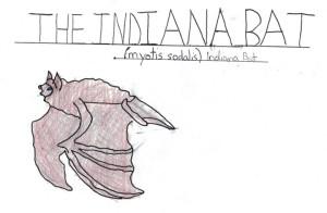Indiana Bat Drawing - MFenyk