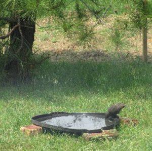 sapia - trash can lid feeder