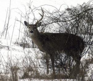 mish - buck series 1