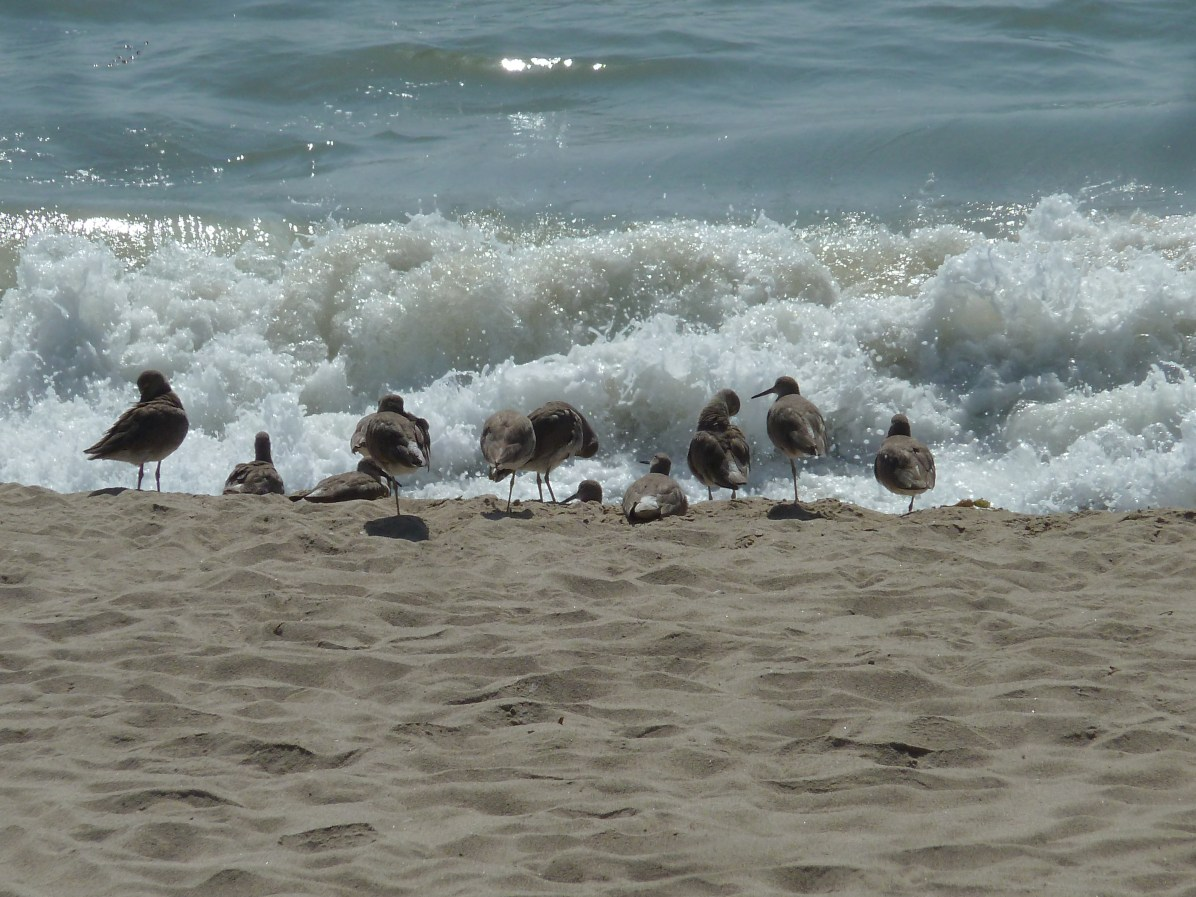 i was fascinated by these sea birds