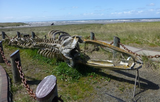 Skeleton of Gray Whale