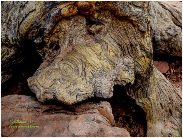Fascinating swirls along the tree's root
