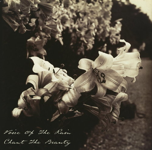 Front cover of Chant The Beauty which is a photograph by Eugène Atget, Lys, from between 1916 and 1919 which is a close up of Lilies in a garden, probably in Paris