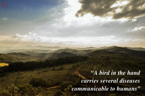 A bird in the hand carries several diseases communicable to humans.