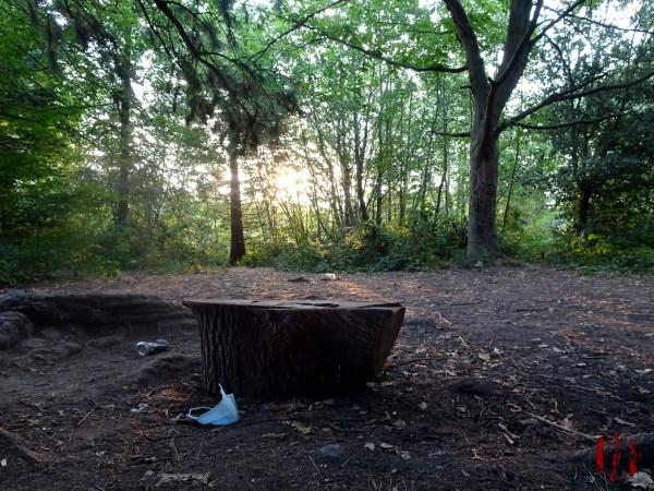 A view throgh trees of the sun rising over Horsham Park seen over a discarded face mask in the time of Coronavirus Covid-19.