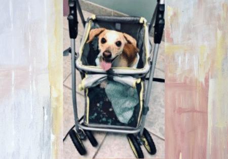 Meet Dinghy Adoptable Doxi