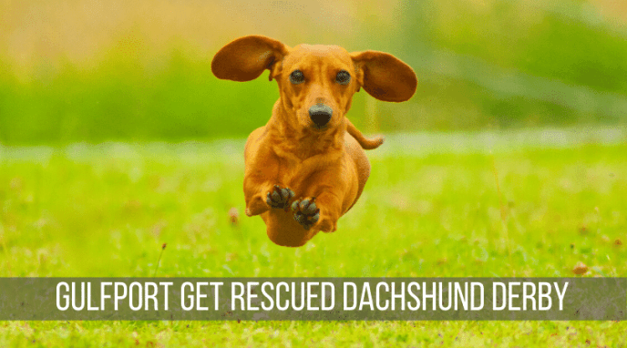 Dachshund Derby - Gulfport Get Rescued
