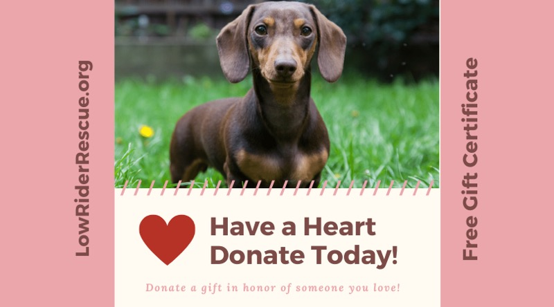 Have a Heart 4 Rescue dogs