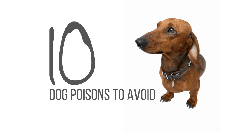 Dog poisons to avoid
