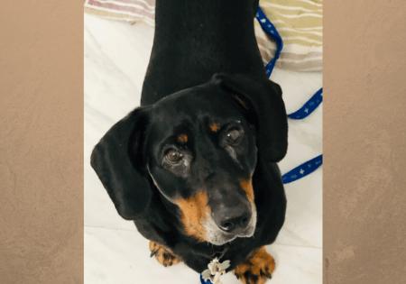 Adoptable Dog Ava