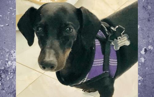 Adoptable Dogs - Lex