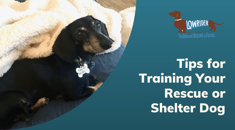 Tips for Training Your Rescue or Shelter Dog