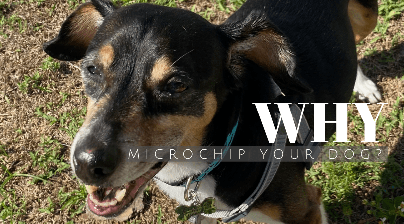 Why Microchip Your Dog?