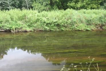 Vegetation in the creek.