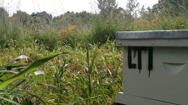 Location of one hive on a prarie.