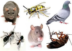 Guardian Pest Management Lowton