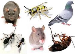 Guardian Pest Management Lowton