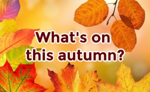 Autumn leaves with the words What's on this autumn?