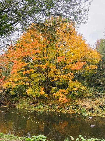 Kirsty Lee McMillan's photo of an autumn tree at Pennington Flash