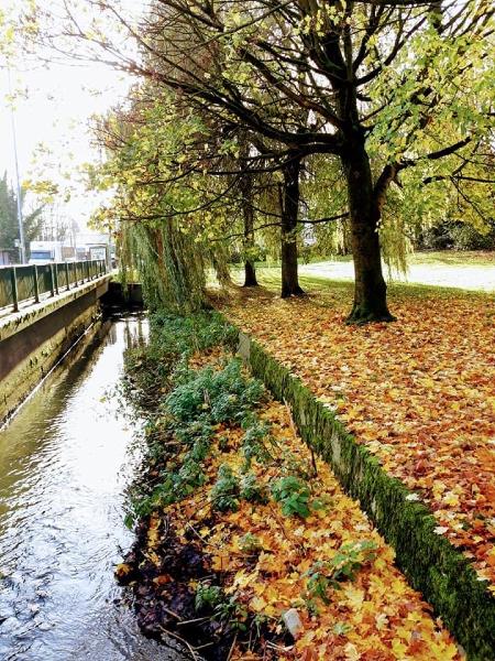 Gaynor Thilwind's autumnal scene at the brook which runs along Bridge Street, Golborne