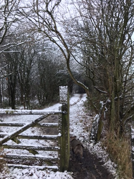 Julie Sargeant's photo of a snowy gate and path on Lowton Common