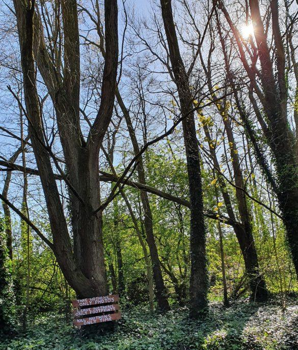 Trees at Millingford Brook Golborne