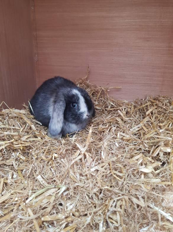 Bunny rabbit in a hutch